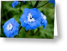 Delicate Blue Greeting Card