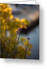 Delicate Bursts Of Purple Greeting Card