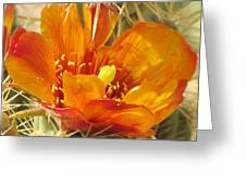Delicate Cactus Flower Greeting Card