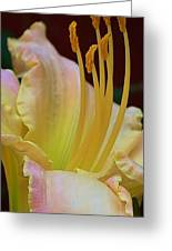 Delicate Lily Greeting Card