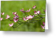 Delicate Pink Dogwood Blossoms Greeting Card