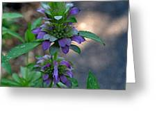 Delicate Purple Flowers-2012 Greeting Card