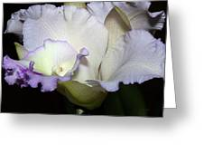 Delicate Purple Orchid Greeting Card