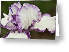 Delicate Ruffles 3 Greeting Card