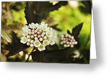 Delicate Spring Bloom Greeting Card