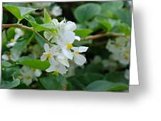 Delicate White Flower Greeting Card