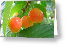 Delicious Plums On The Branch Greeting Card