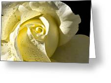 Delightful Yellow Rose With Dew Greeting Card