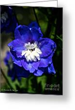Delphinium Face Greeting Card