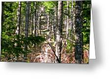 Depth Of Trees Greeting Card