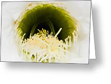 Depths Of The Cactus Flower Greeting Card