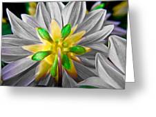 Desaturated Dahlia Greeting Card