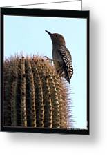 Desert Bird Atop Saguaro Greeting Card