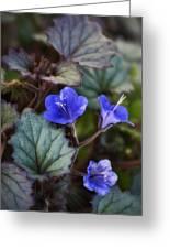 Desert Bluebells  Greeting Card