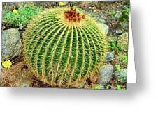 Desert Cactus Greeting Card