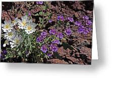 Desert Chicory And Heliotrope Greeting Card