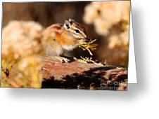 Desert Chipmunk Eating His Breakfast Greeting Card