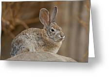 Desert Cottontail Rabbits Greeting Card