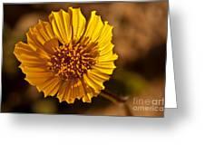 Desert Dandelion Greeting Card