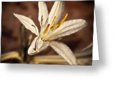 Desert Easter Lily Greeting Card