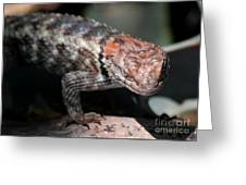 Desert Lizard Greeting Card