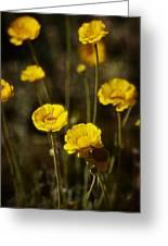 Desert Marigold Greeting Card