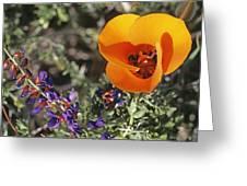 Desert Mariposa Tulip & Coulters Greeting Card