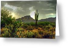 Desert Sun Rays Greeting Card