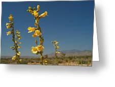 Desert Sweetpea Greeting Card