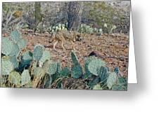 Desert Wolf Greeting Card
