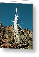 Desolation Wilderness Tree 2 Greeting Card