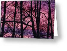 Detail Of Bare Trees Silhouetted Greeting Card