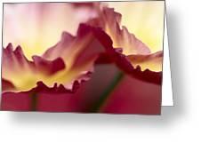 Detail Of Crimson Colored Rose Petals Greeting Card