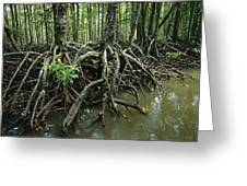 Detail Of Mangrove Roots At The Waters Greeting Card by Tim Laman