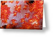 Detailed View Of Soft Coral Revealing Greeting Card