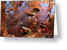 Details In Nature Greeting Card