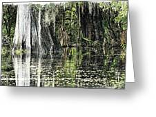 Details Of A Florida River Greeting Card