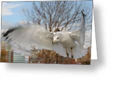 Determined Gull Greeting Card