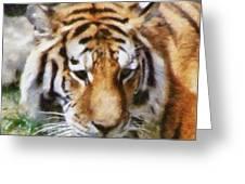 Detroit Tiger Greeting Card
