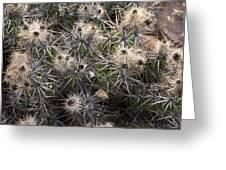 Devil's Club Cactus (gousonia Invicta) Greeting Card
