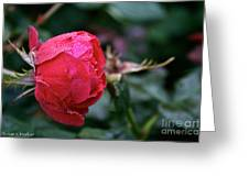 Dew Drenched Rose Greeting Card