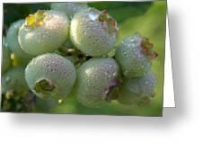 Dew Drop Berries Greeting Card