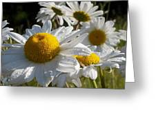 Dew Drops And Daisy Tops Greeting Card