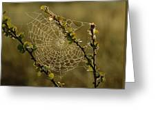 Dew Highlights An Orb-weaver Spiders Greeting Card