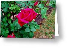 Dew Kissed Red  Rose Greeting Card