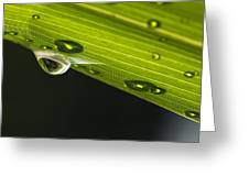 Dew On Leaf, Germany Greeting Card