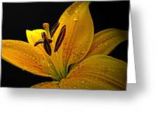 Dew On The Daylily Greeting Card