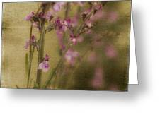 Dewdropped Garden Greeting Card