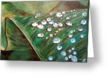Dewdrops Greeting Card