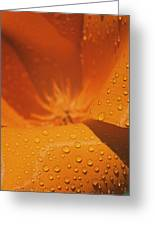 Dewdrops On A Flower Greeting Card